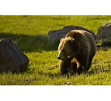 Grizzly Bear-Signed   #4545 Photographic Print
