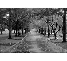 A Lonely Road Photographic Print