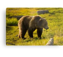 Grizzly Bear-Signed-#4477 Metal Print