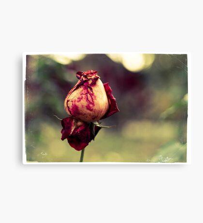 Endless Beauty Canvas Print