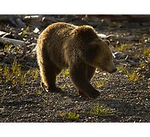 Grizzly Bear-Signed-#4429 Photographic Print