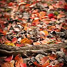 What remains of Fall by Jodi Morgan