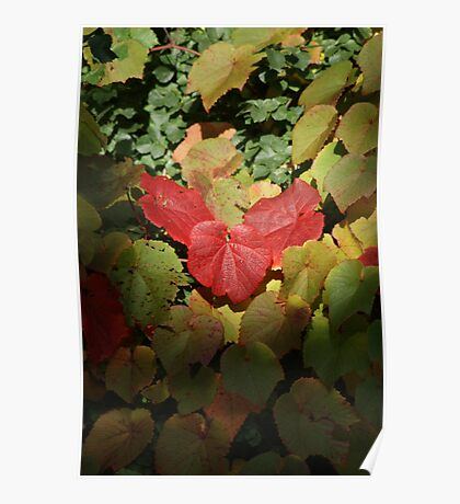Those Autumn Leaves..... Poster