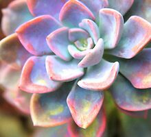 Succulent Plant by Paula Bielnicka