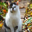 Milli - Enjoying the Garden in Fall by vbk70
