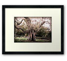 Creepy Tree at Upton House Framed Print