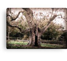 Creepy Tree at Upton House Canvas Print