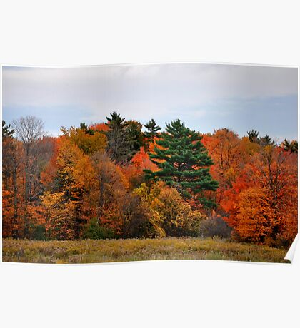 The beautiful autumn colors!! Poster