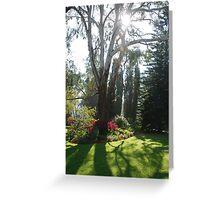 Garden sunlight 3 Greeting Card