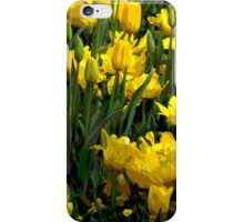 Beautiful yellow tulips iPhone Case/Skin