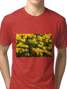 Beautiful yellow tulips Tri-blend T-Shirt