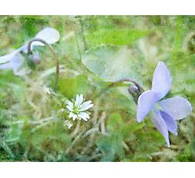 Miniatures Photographic Print