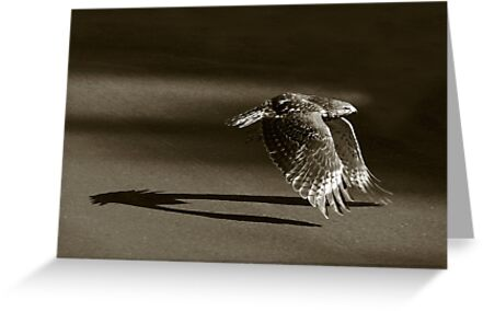 flaps down by J.K. York