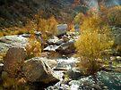 Water ~ Sabino Canyon by Lucinda Walter