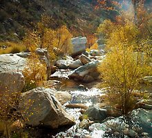 Water ~ Sabino Canyon by Lucinda Walter