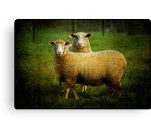 sheepish love Canvas Print