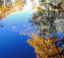 Vertical Pond Reflection - La Cienega, NM by Lisa Blair