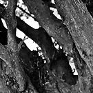 Tree Trunk B&W by lendale