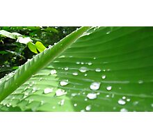 Drops and Leaves Photographic Print