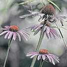 Summer Coneflowers by bannercgtl10
