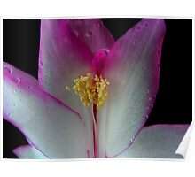 Simply Stunning Stamen Poster
