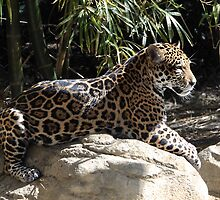 Catching Some Rays by Gail Falcon