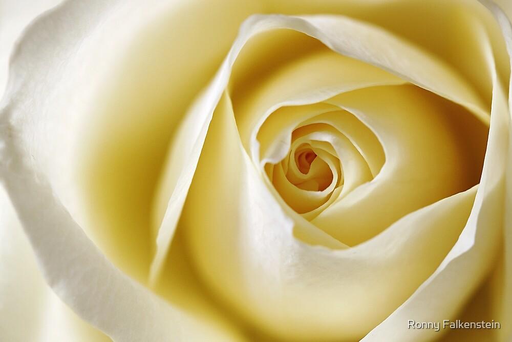 La vie en rose, #2 by Ronny Falkenstein
