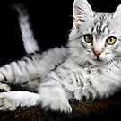 Pussy Cat by carlosporto