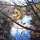 River Fleet, Gatehouse of Fleet, Scotland by sarnia2