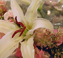 Lovely Lily by daytoevening