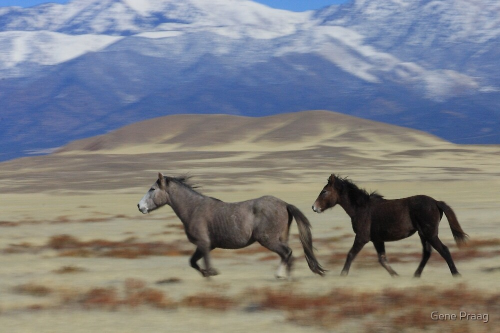 On The Move by Gene Praag