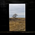 Looking Through by Christina Apelseth
