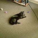Untitled by catnip addict manor