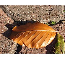 Fallen Russet Leaf Photographic Print