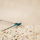 Drogonfly - Sandy Point by Tamara Brandy