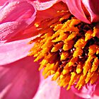Pink Dahlia Centre Supermacro by BlueMoonRose