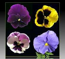 Pansies Collage - Black Background by BlueMoonRose