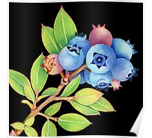 Wild Maine Blueberries Poster