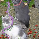 Cool Flower Cats In The Garden by MaeBelle