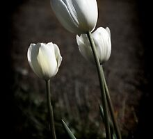 Three White Tulips by Elaine Teague
