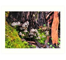 Fungus reaching out Art Print