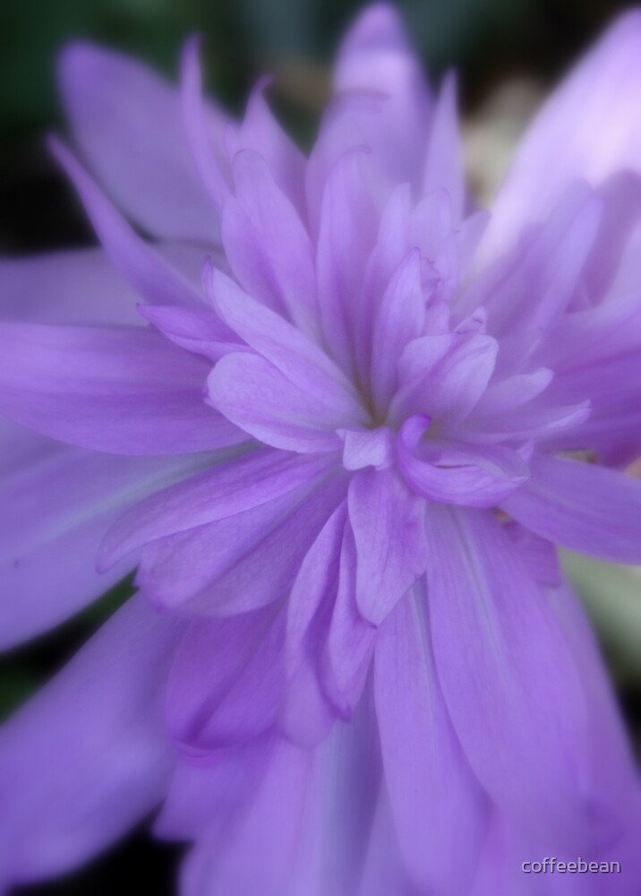 Softness of the Double Autumn Crocus by coffeebean