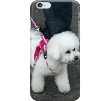 White Fluff Dog In Pink iPhone Case/Skin