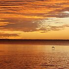 Sunset seagull, Coral Bay, WA by ladieslounge
