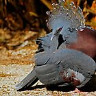 Victoria Crowned Pigeon by Winston D. Munnings