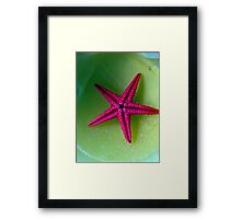 Lonely starfish Framed Print