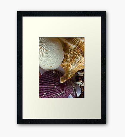 Shell compilation Framed Print