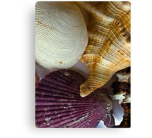 Shell compilation Canvas Print