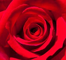 Red Red Rose by Andrew (ark photograhy art)