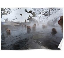 Snow monkeys, Jigokudani Poster